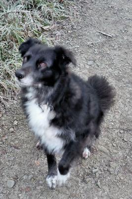 My dog Jake aged 12 years