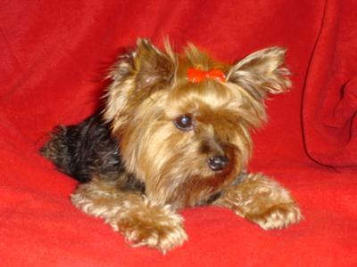 Pookie in 2006