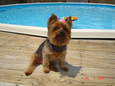 Pookie By the pool...Chillin for a picture